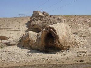 Canavara benzeyen taş ilgi odağı oldu
