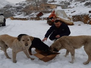 Başıboş köpeklere yiyecek bırakıldı