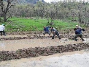 Irak sınırında imece usulü çeltik ekimi