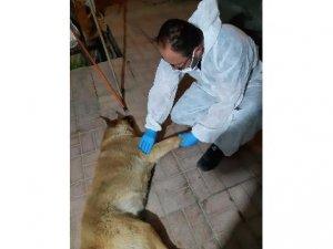 Aracın çarptığı köpek tedavi altına alındı