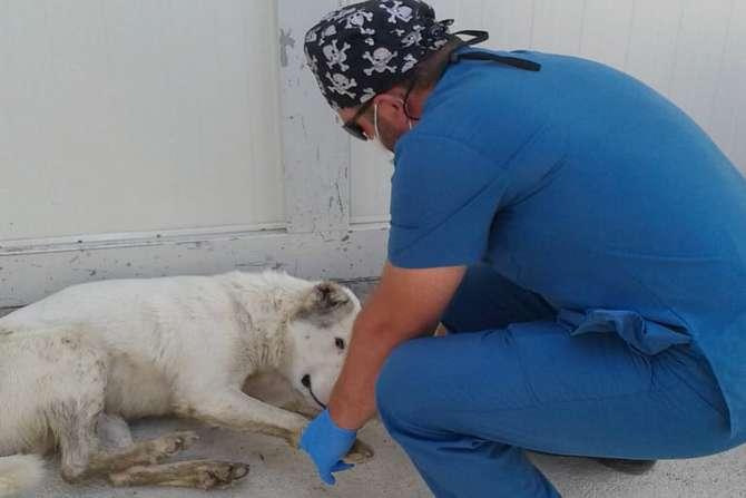 Yolda yaralı bulduğu köpeği Hakkari'ye getirdi