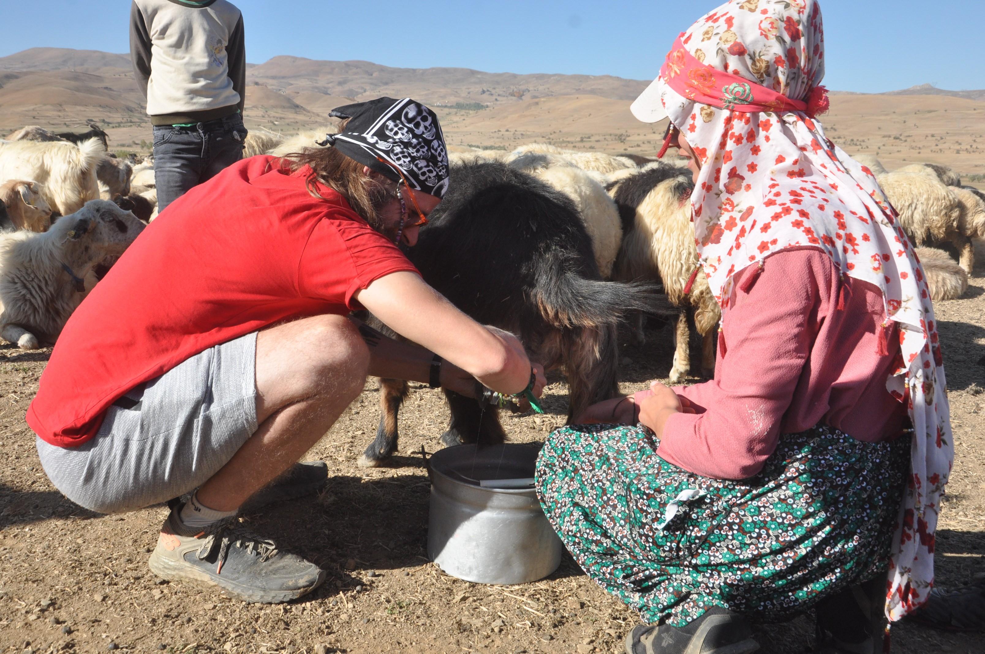 Yüksekova'ya hayran kalan İtalyan, koyun sağmayı öğrendi