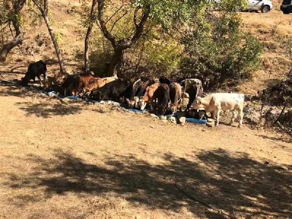 Hakkari'de 5 bin 529 kaçak hayvana el konuldu