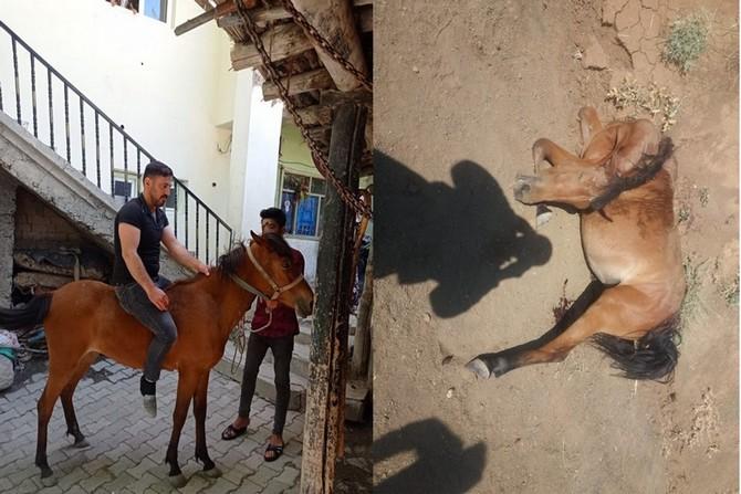 Hakkari'de kurtlar saldırdıkları atı parçaladı