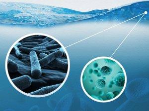 Su ve besinlerle bulaşan hastalıklar