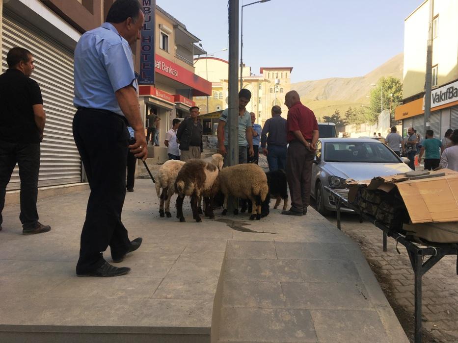 İlk Kurbanlık Koyunlar Hakkari Şehir Merkezine Getirildi