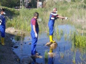 Hakkari Belediyesinden sivrisinekle mücadele
