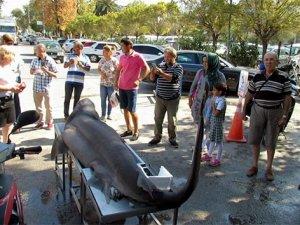 Alzheimer hastalarına köpek balığı umut oldu