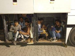 Otobüsten 142 kaçak göçmen çıktı