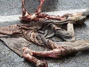 Ayıların saldırdığı attan geriye sadece iskeleti ve derisi kaldı