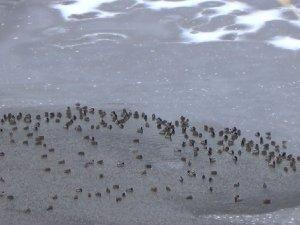 Sarıkamış'ta Ördek Gölü dondu