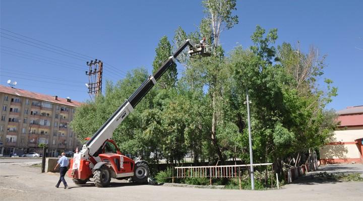 Yüksekova'da polenli ağaçların kesimi