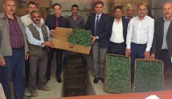 Hakkari'de çiftçilere 102 Bin Adet sebze Fidanı Dağıtıldı