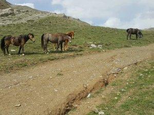 Yılkı Atları Doğaseverlerin İlgi Odağı Oldu