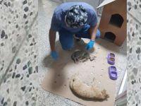 Aracın çarptığı kediler tedavi altına alındı