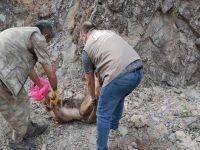Kayalıklara sıkışan köpeği korucular kurtardı
