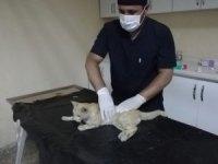 Darp edilen kedi kurtarıldı